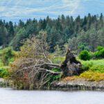 Episode 2: Waldgedanken – Zwiegespräch mit der Natur